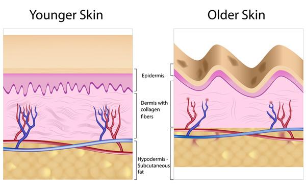 Collagen-theo-tuoi-tac
